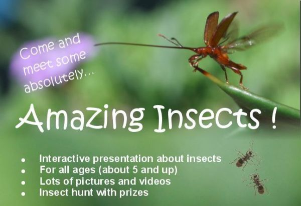 insect-day-2