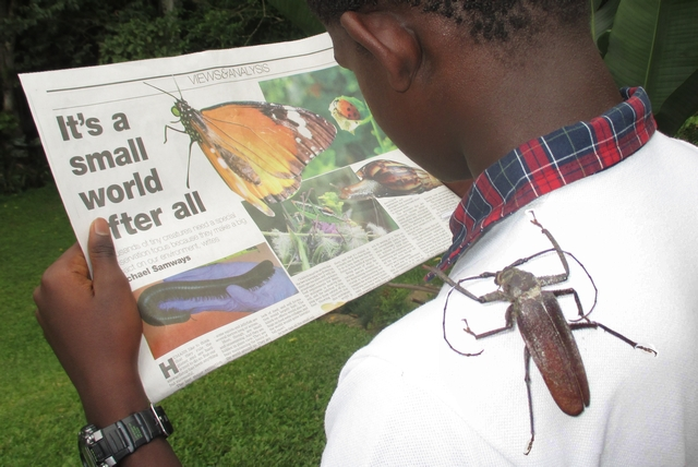 Insects in news sma