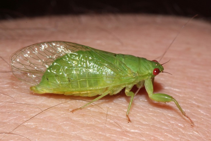 Photography 004 cicada