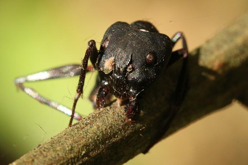 Dead ant.jpg