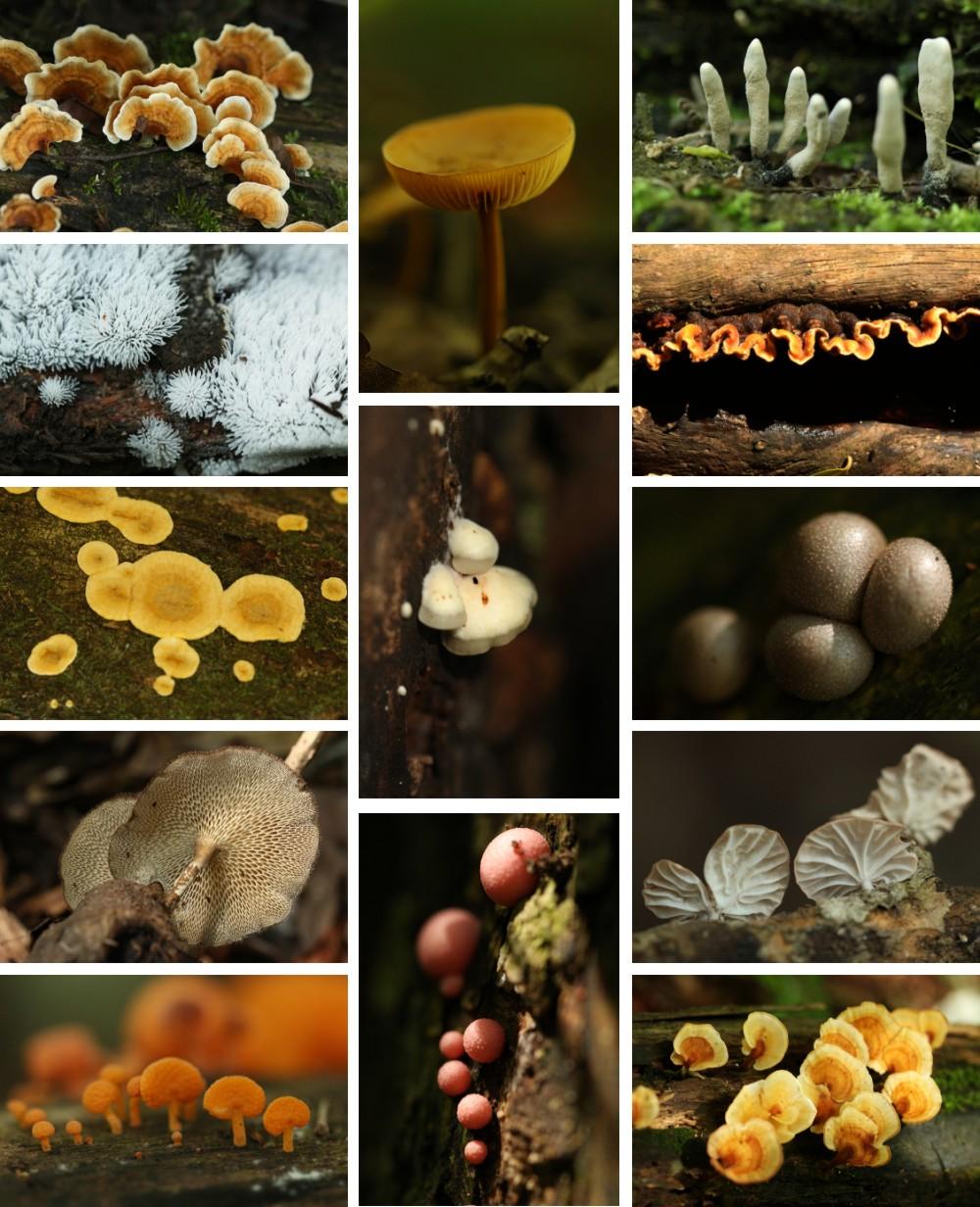 Fungi of Ngome