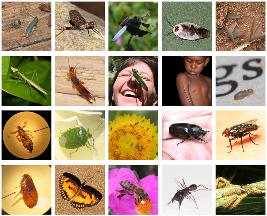 insects doference